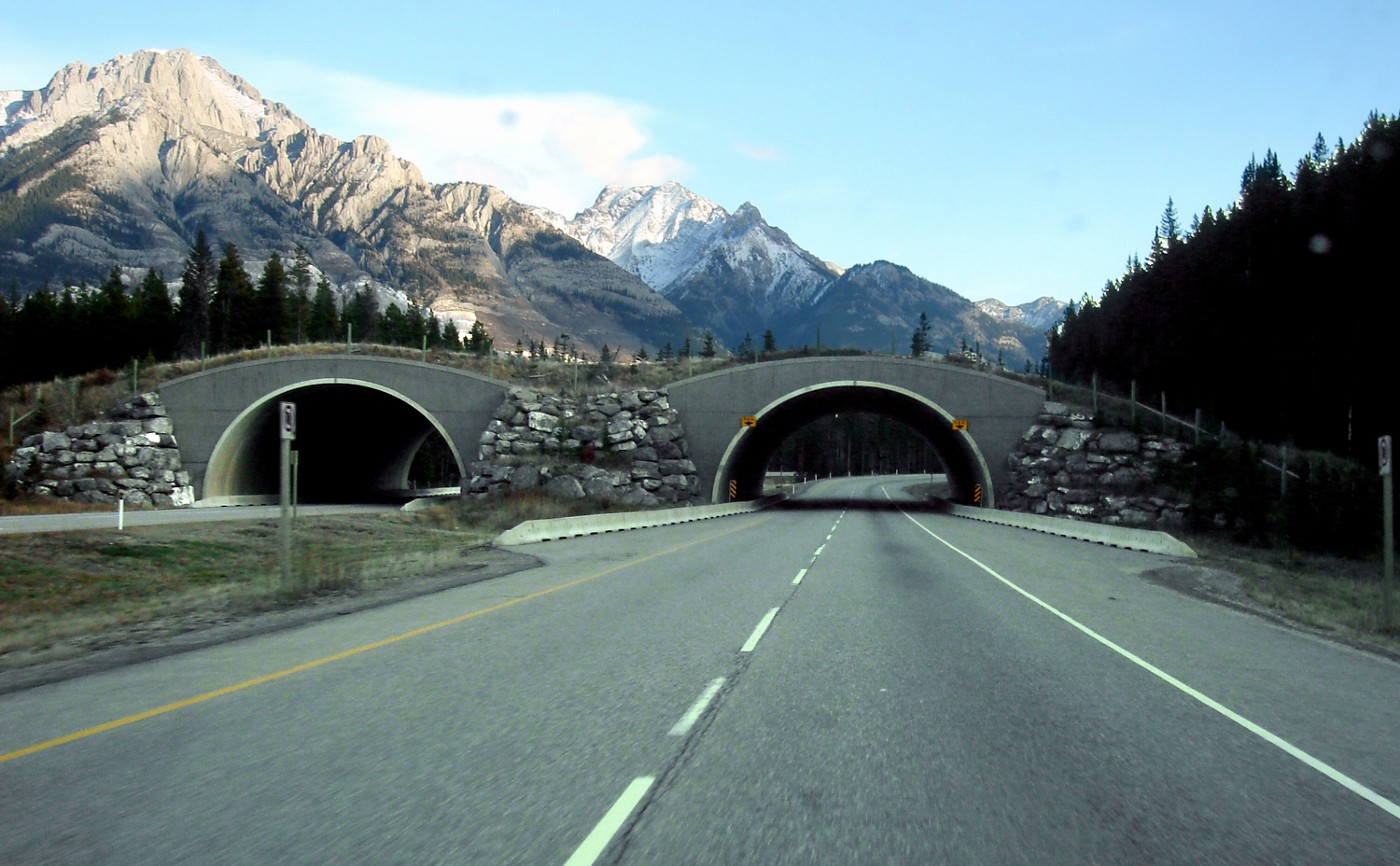 Trans-Canada-wildlife_overpass Terry Fox LARP Hope is the last thing in the box
