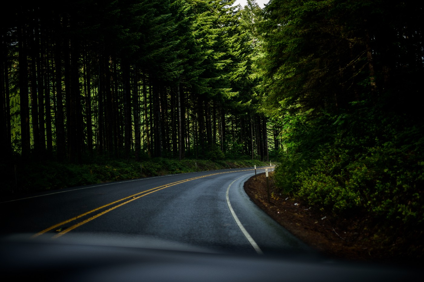 highway curving out of sight in a forest of fir trees