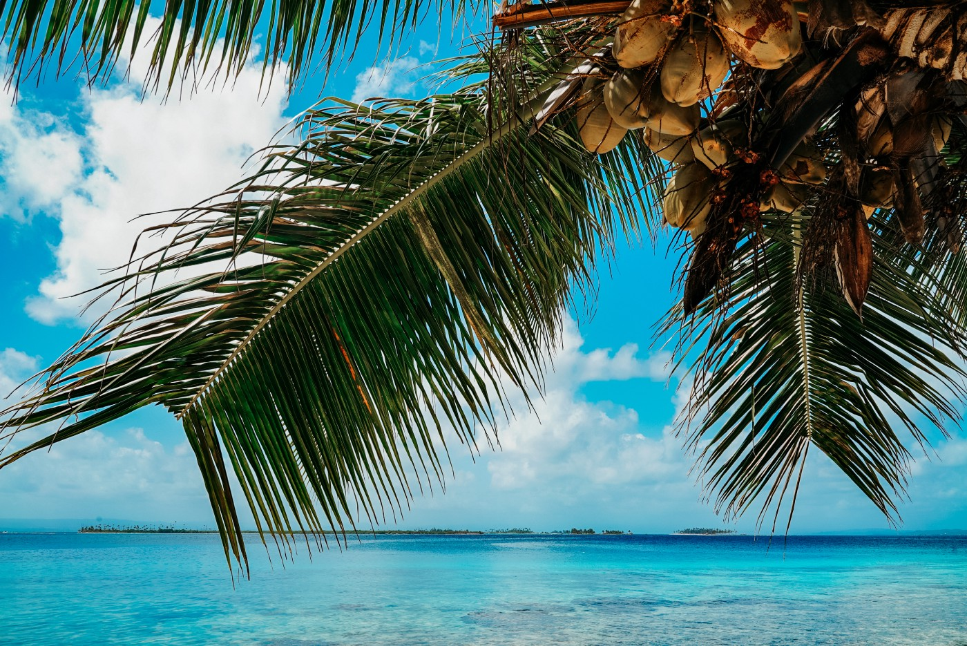 Palm tree over ocean. Rebecca Murauskas Medium writer. How to move to another country. American expat living abroad. FIRE