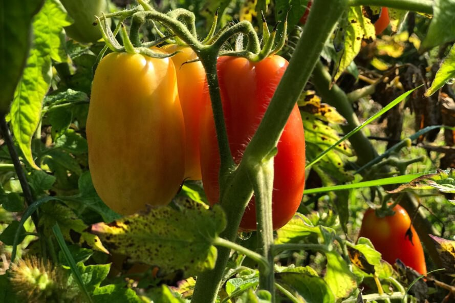 buy vegetable seeds on line