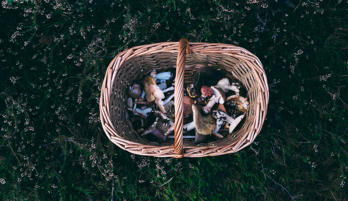 Foraging For Food:  Take charge of what you eat and where it comes from.