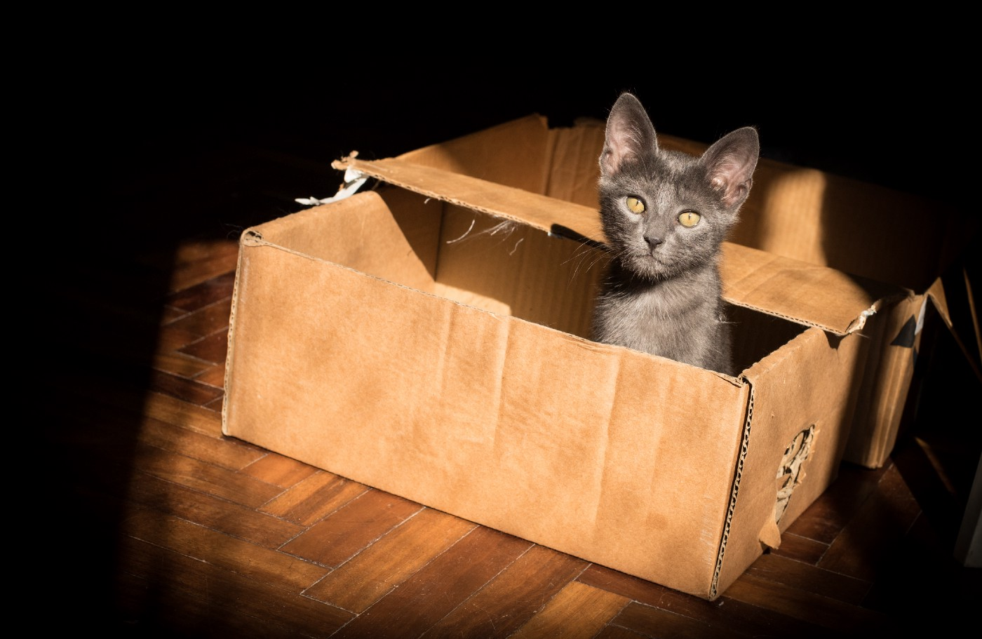 This is the cover image for the article from unsplash—shows a cute cat in a cardboard box