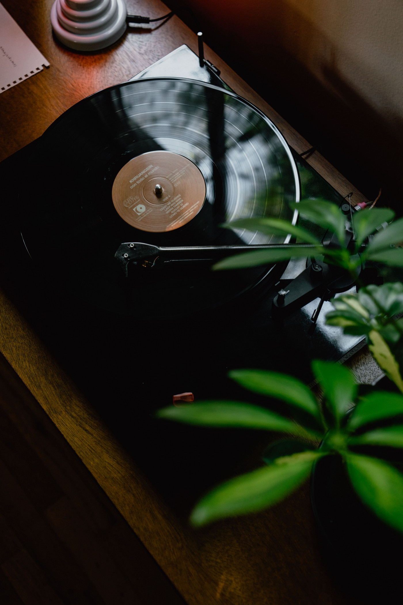 The image shows a record on an turntable. Next to the image of the dark record are the green leaves of a beautiful house plant.
