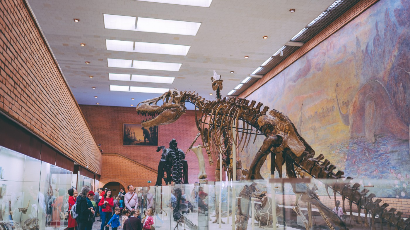 A fossilised dinosaur skeleton in a museum