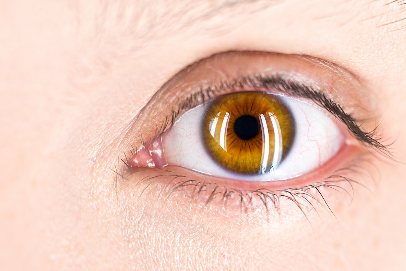 A close up of a brown eye representing sight