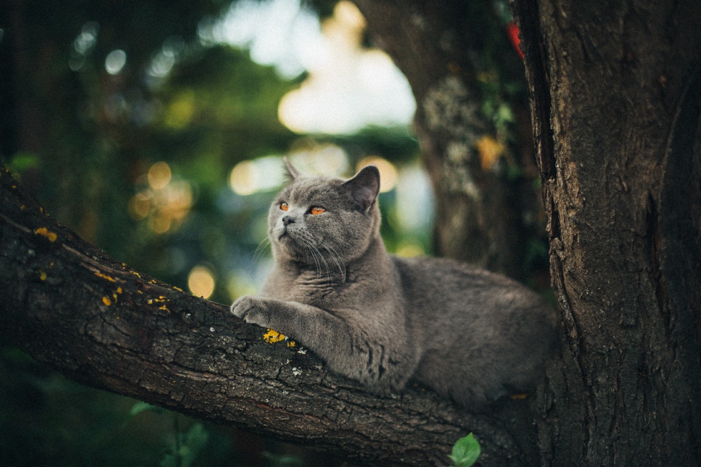 Gray cat sitting in a tree