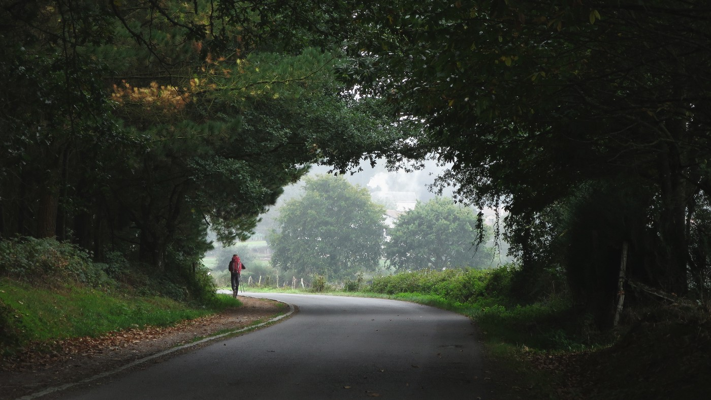 A photo taken from afar of a runner going down a path with lush trees and green.