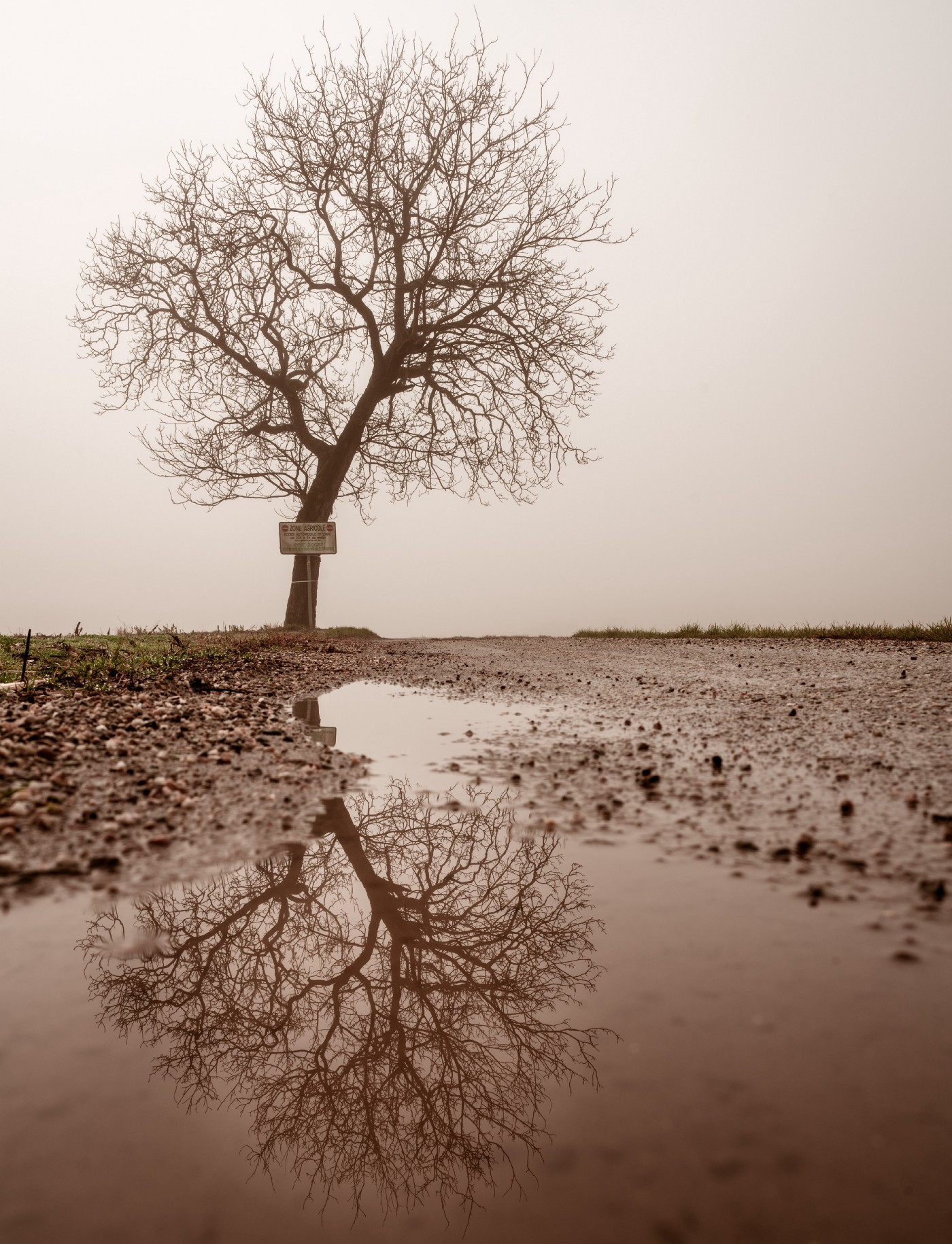 Old, leafless tree surrounded by muddy, lifeless ground. Image in sepia, daytime.