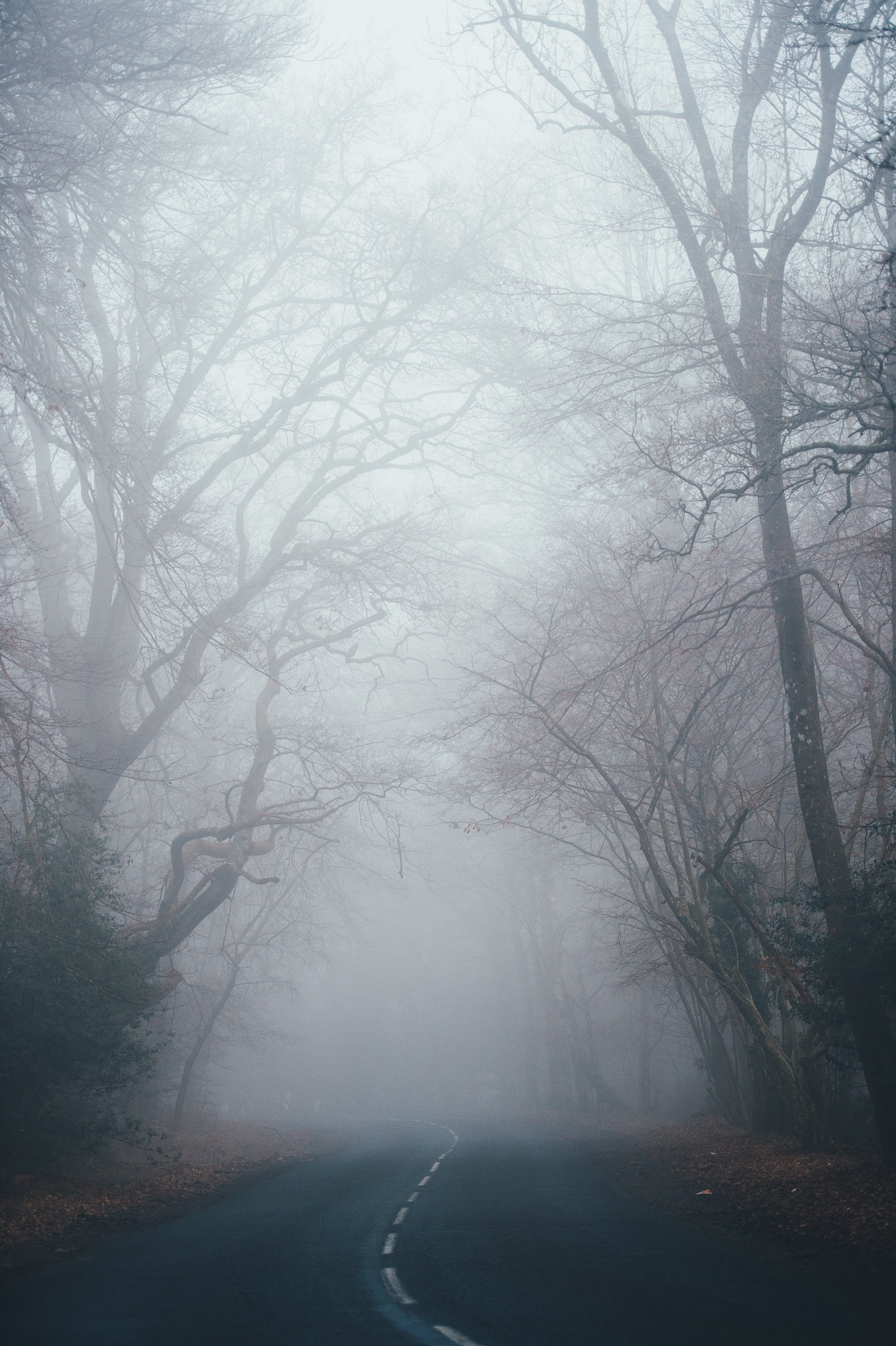 Picture of a foggy road.