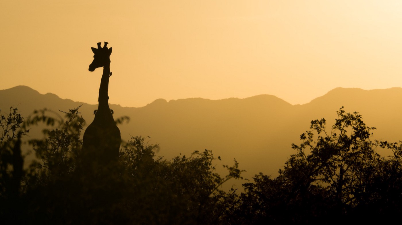 Photo of a giraffe standing tall, with mountain range in the background.