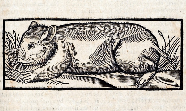 A woodcut illustration of a rat on the ground framed by grass