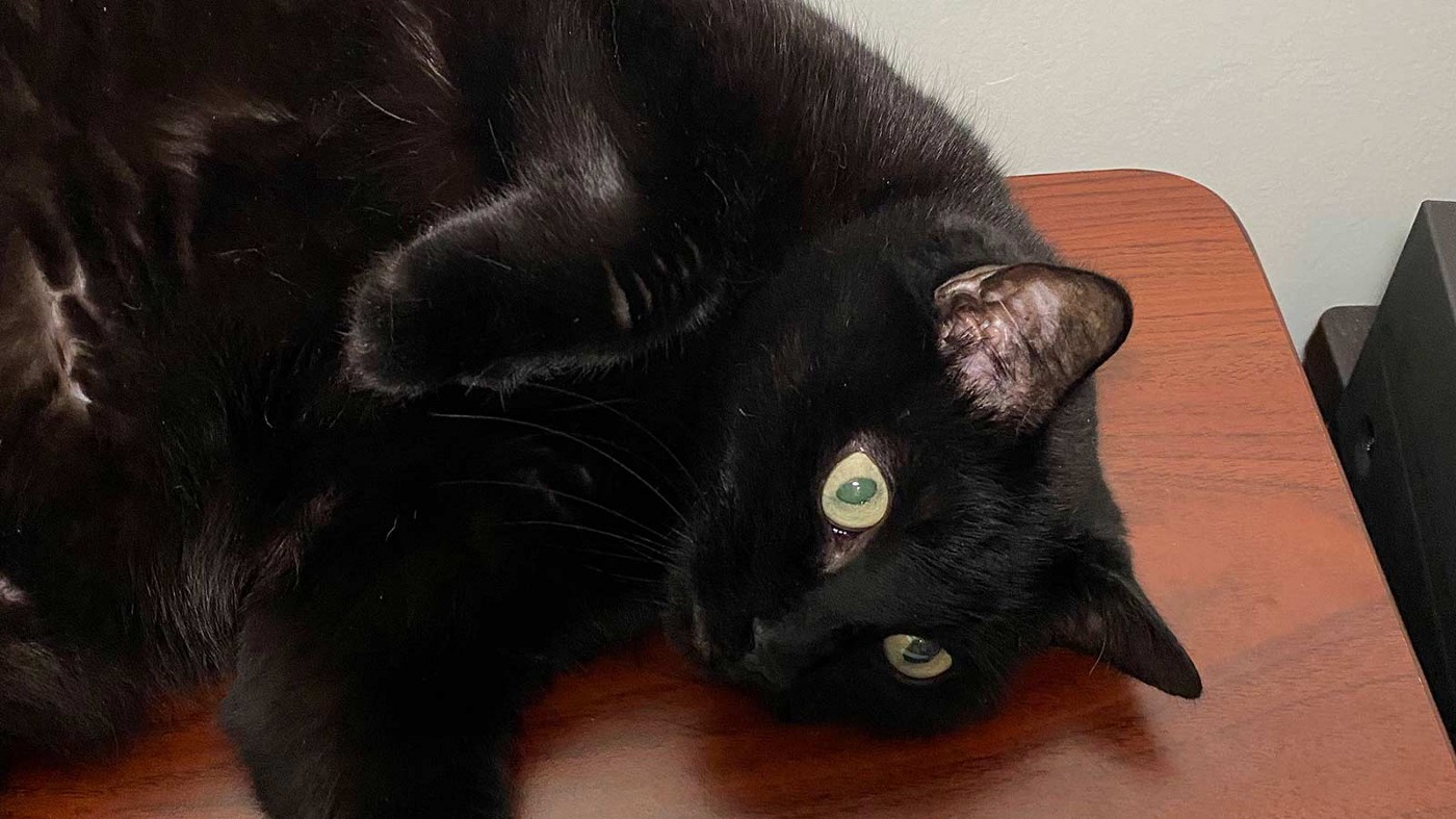 Black cat with green eyes lounging on a desk.