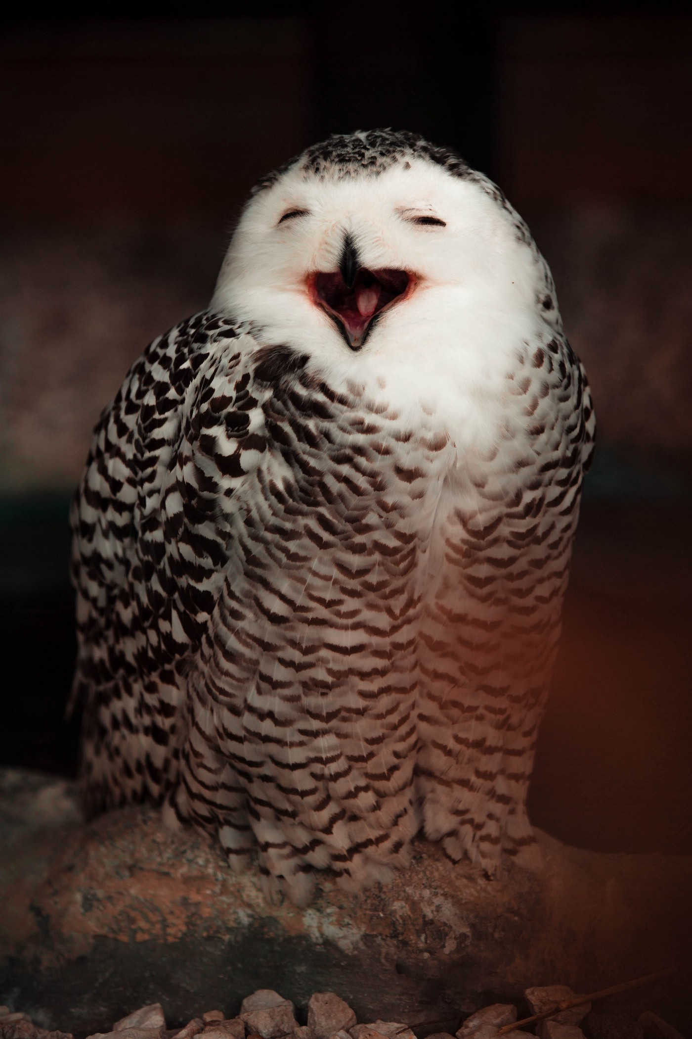 An owl smiling