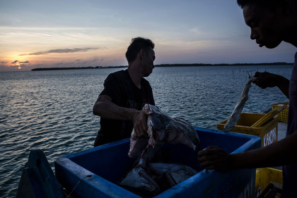 Fisherman living in fear following Chinese incursion in Indonesian waters