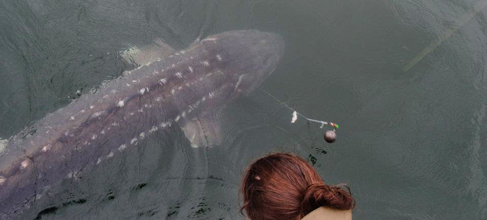 angler with a sturgeon from above