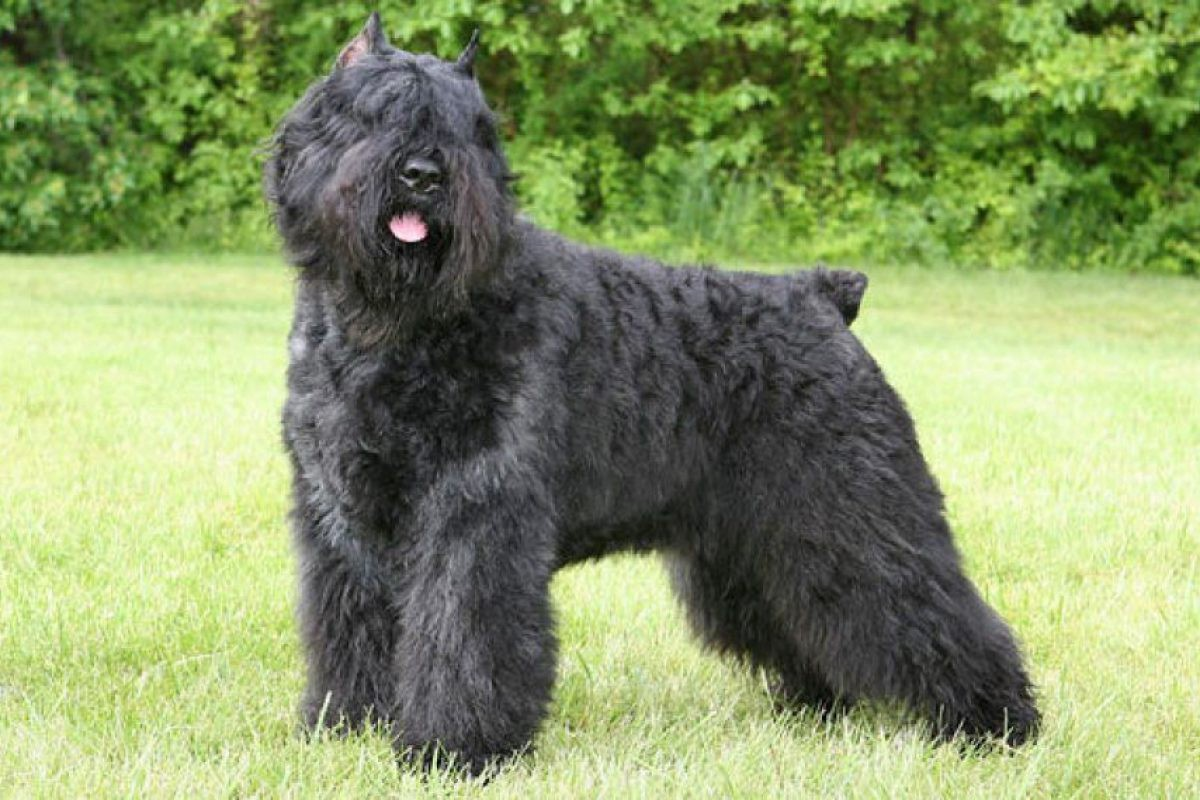 Unique and Exotic Dog Breeds You Never Thought Existed