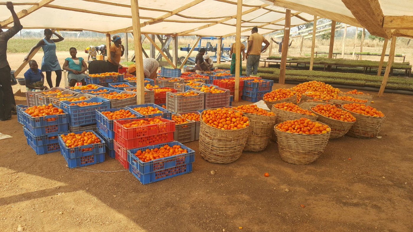 Seeing Black in a Sea of Red — Why We Invested in Tomato Jos