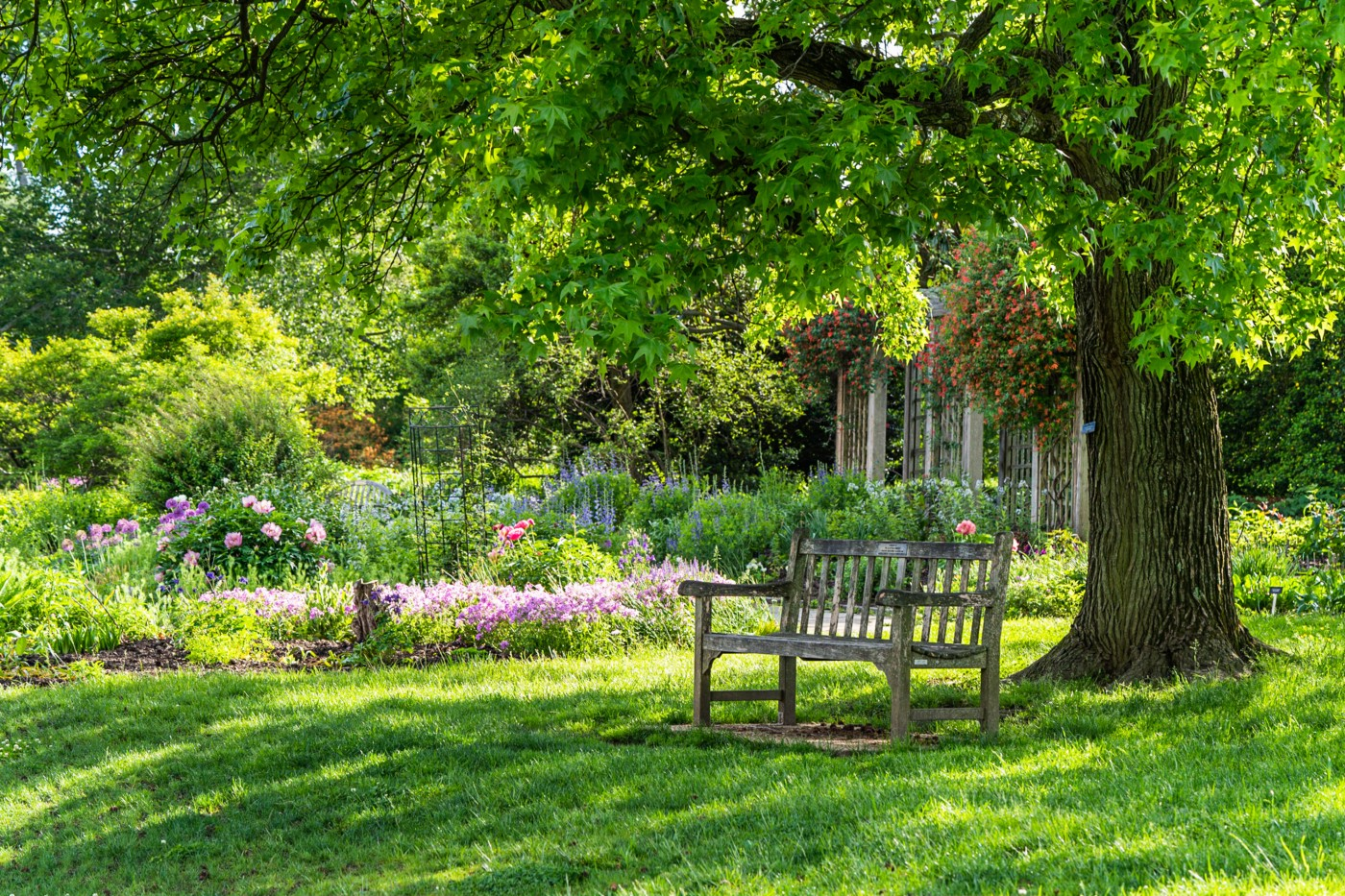 A wooden bench sits beneath a lush maple tree, with flowering gardens surrounding it.