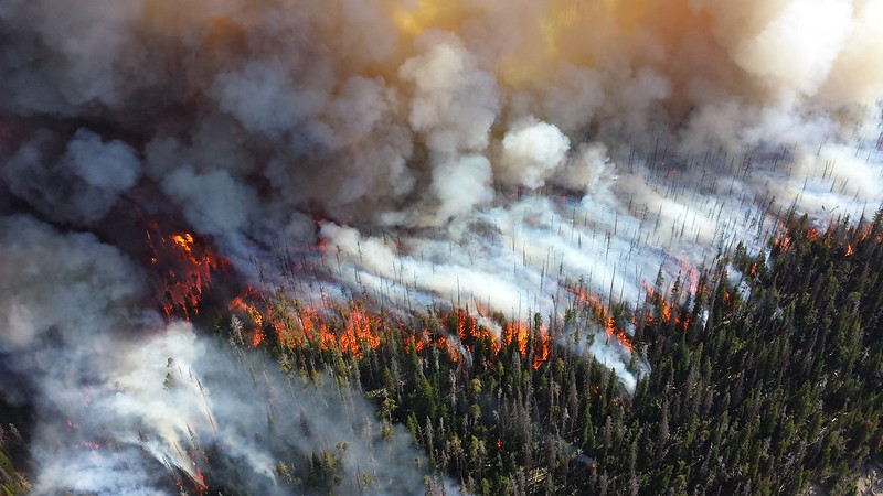 Wildfire engulfs forest
