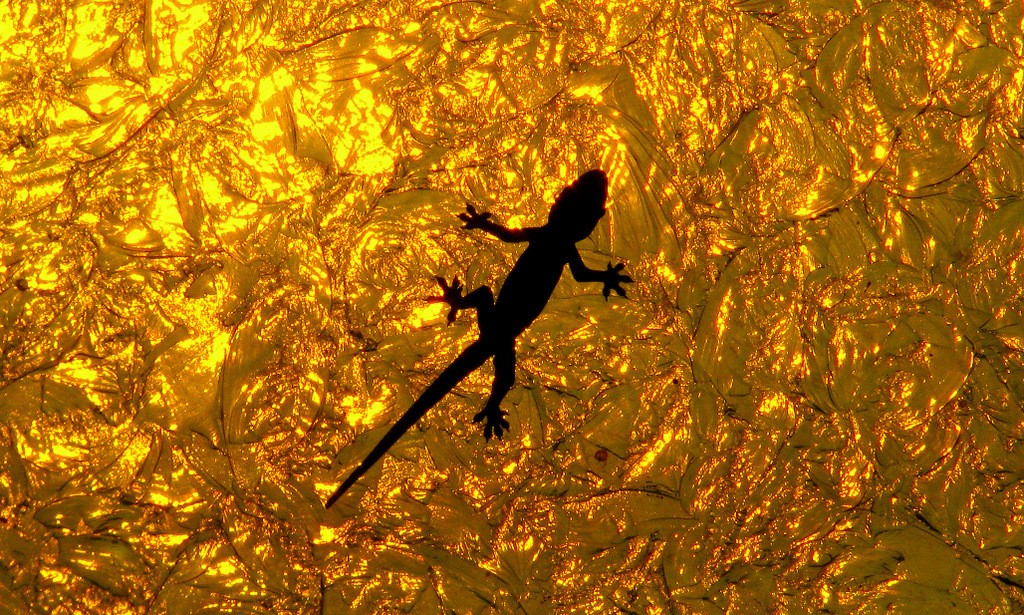 The silhouette of a gecko against a crinkled metallic gold background.