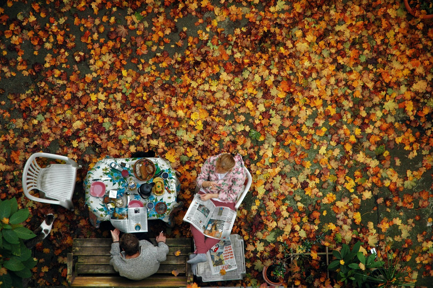 Couple sitting outside with newspapers and fall leaves