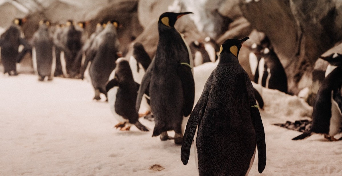 Penguins, Gold Coast QLD, Australia — Josh Withers via Unsplash