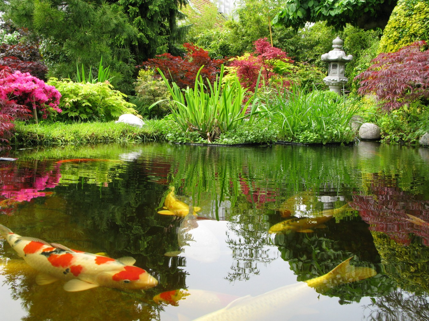 Picture of a beautiful pond with koi fish swimming in it