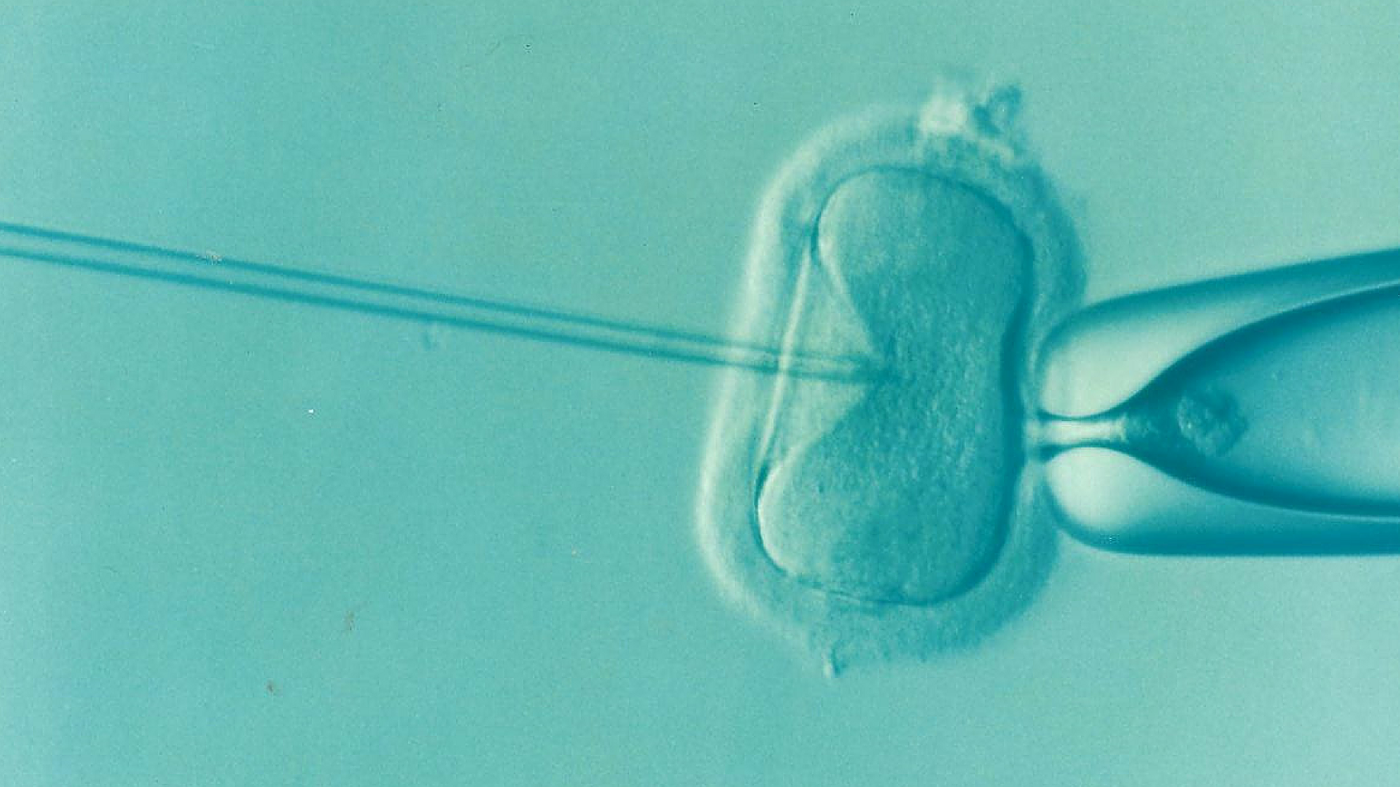 Microscopic image of an egg being fertilised through IVF