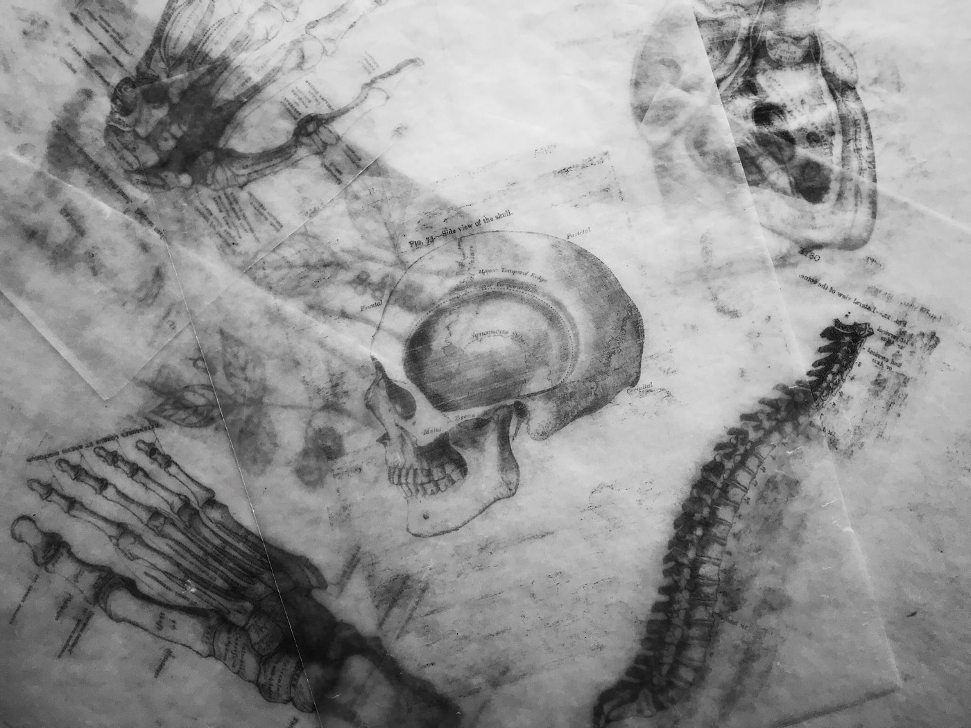 a series of anatomical sketches featured a skull, foot, and spine