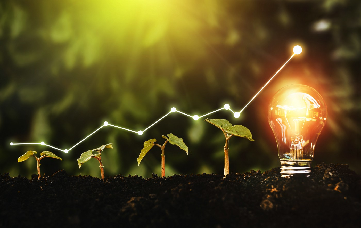 plants growing in the ground with growing graph above and lightbulb