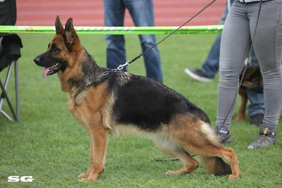 Looking out for the Unscrupulous Dog Breeders in Your