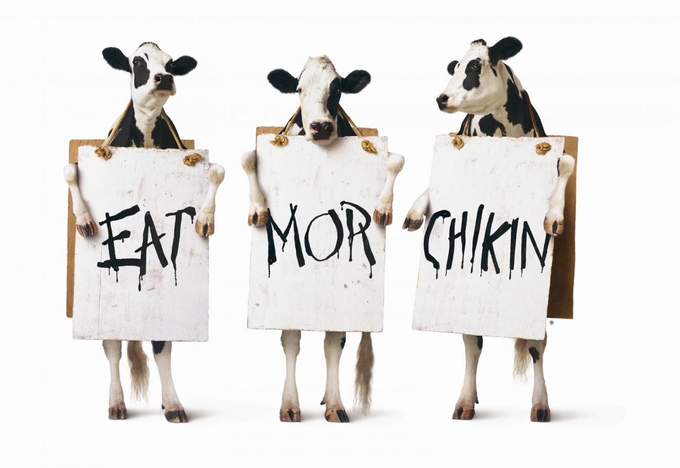 """A common Chick-fil-A marketing image, showing three cows on their hind legs, holding signs that say, from left to right, """"EAT"""", """"MOR"""", and """"CHIKIN""""."""