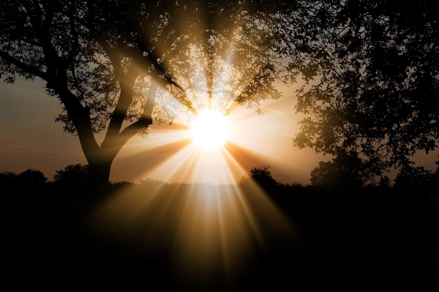 Sun shining over the Earth through the leaves of two trees in the foreground