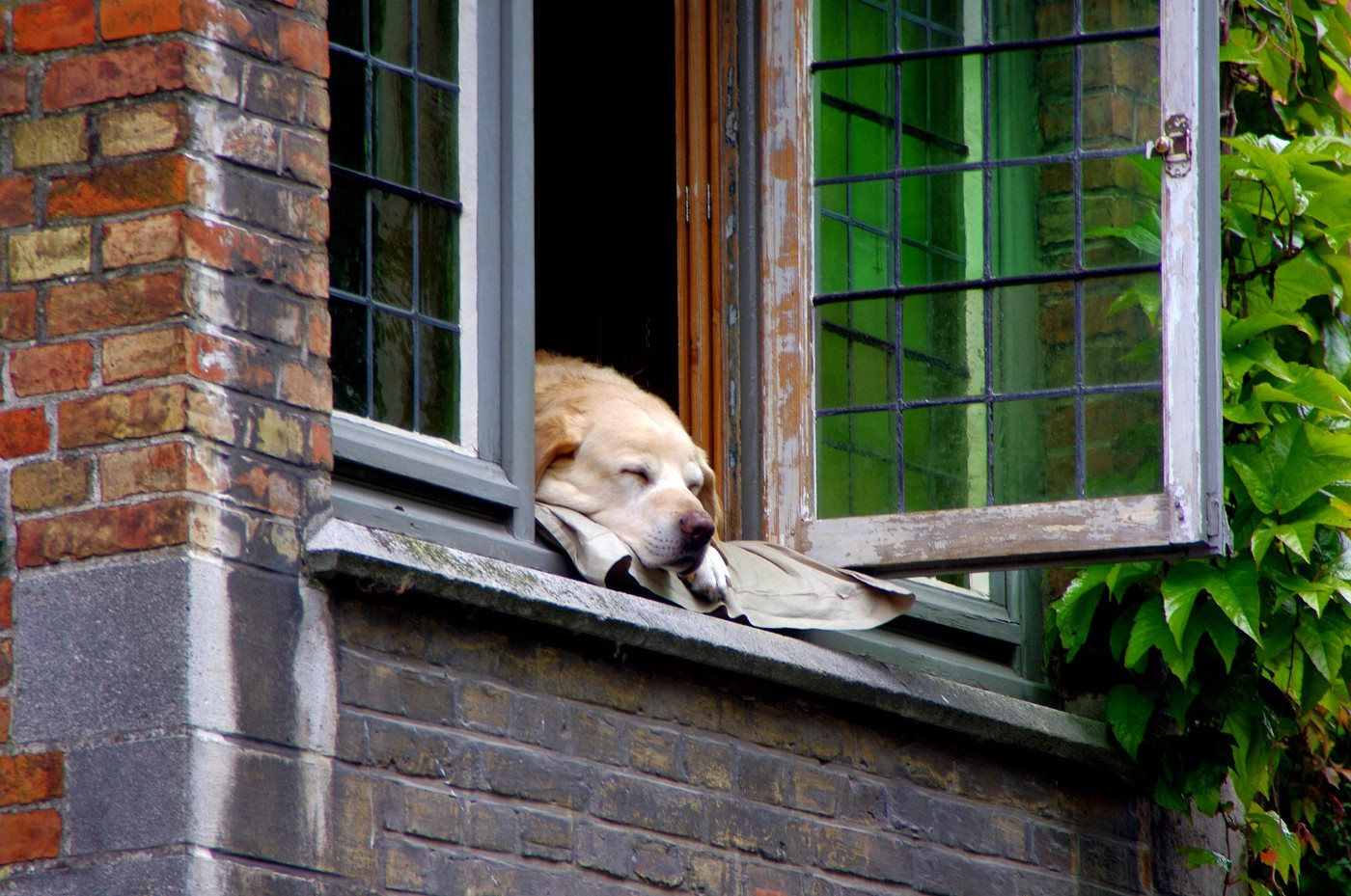 Thinking of Moving? Think Organizing First. Dog at a home window.