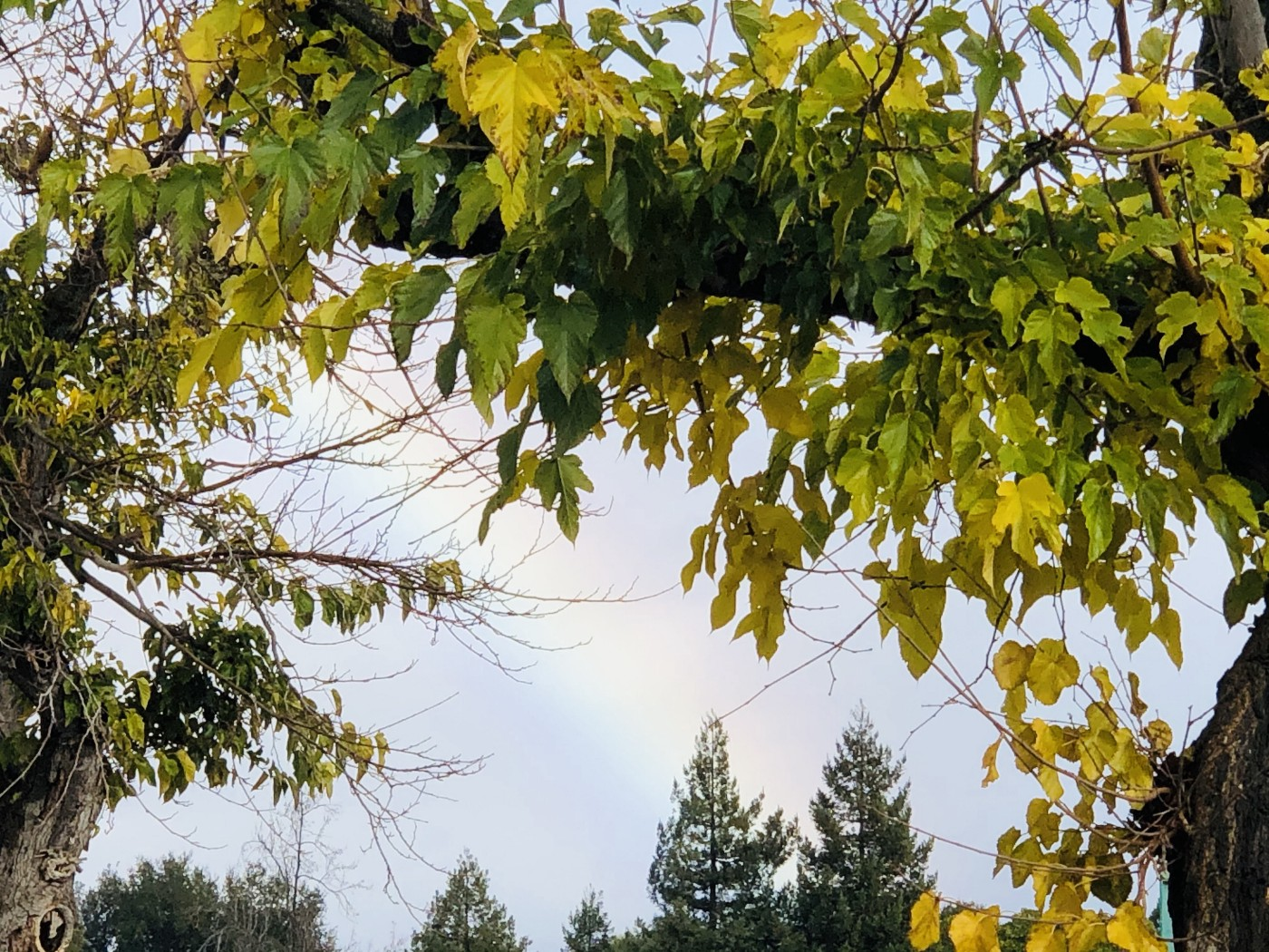 decorative: green leafy trees framing a blue sky with a rainbow