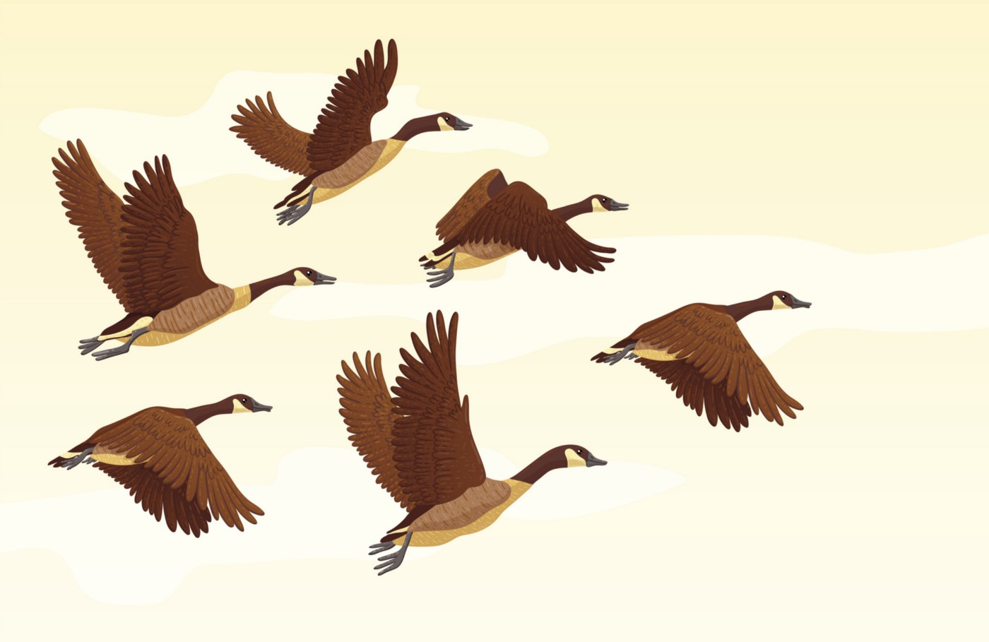 Illustration of flock of Canadian geese flying