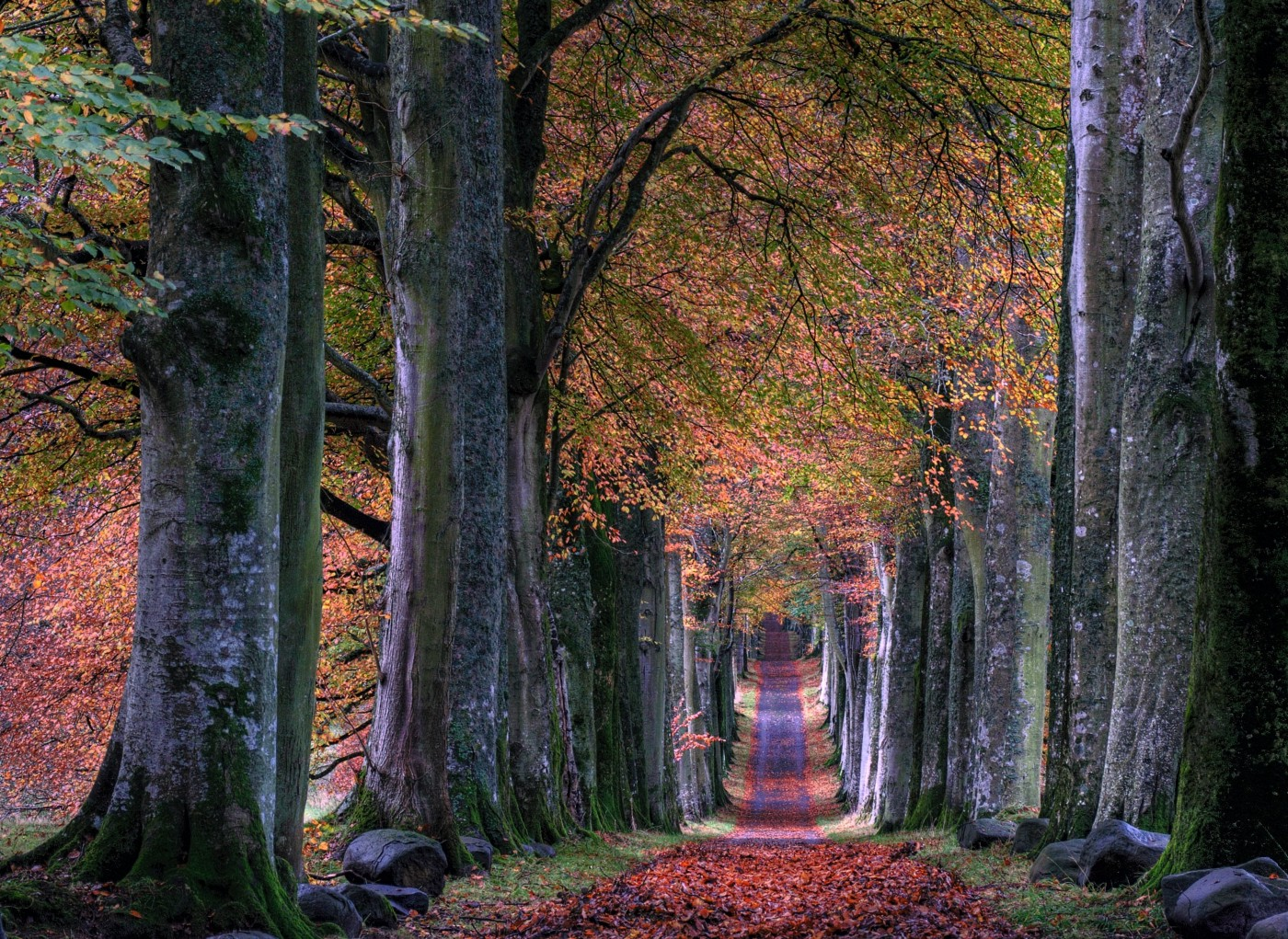 Photo of a path lined with fall beautiful bright colored leaves, cutting through a wooded area.