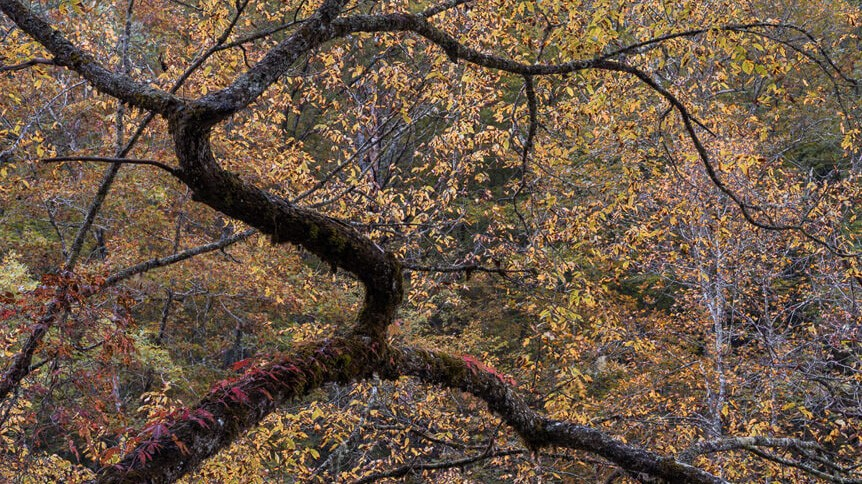 Twisted branch surrounded by yellow and red leaves