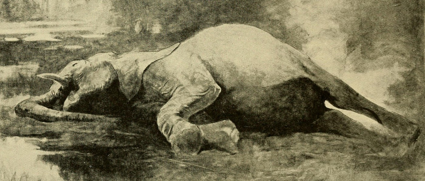 The elephant has been a symbol of the Republican party since an 1874 political cartoon by Thomas Nast.