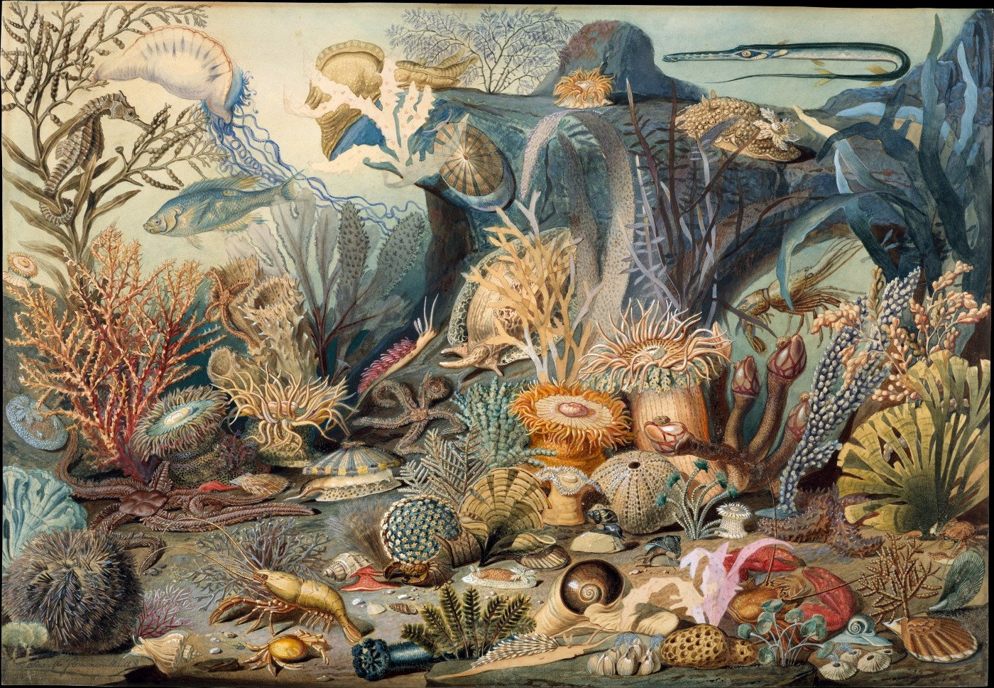 One of the earliest American submarine illustrations; Ocean Life—James M. Sommerville. He collected the specimens and lithographed the image.