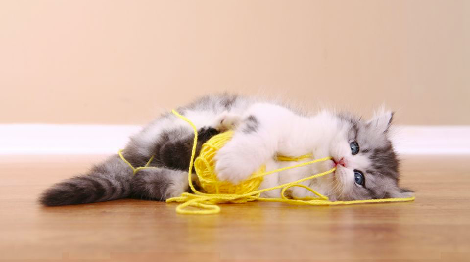 kitten with a ball of yellow yarn