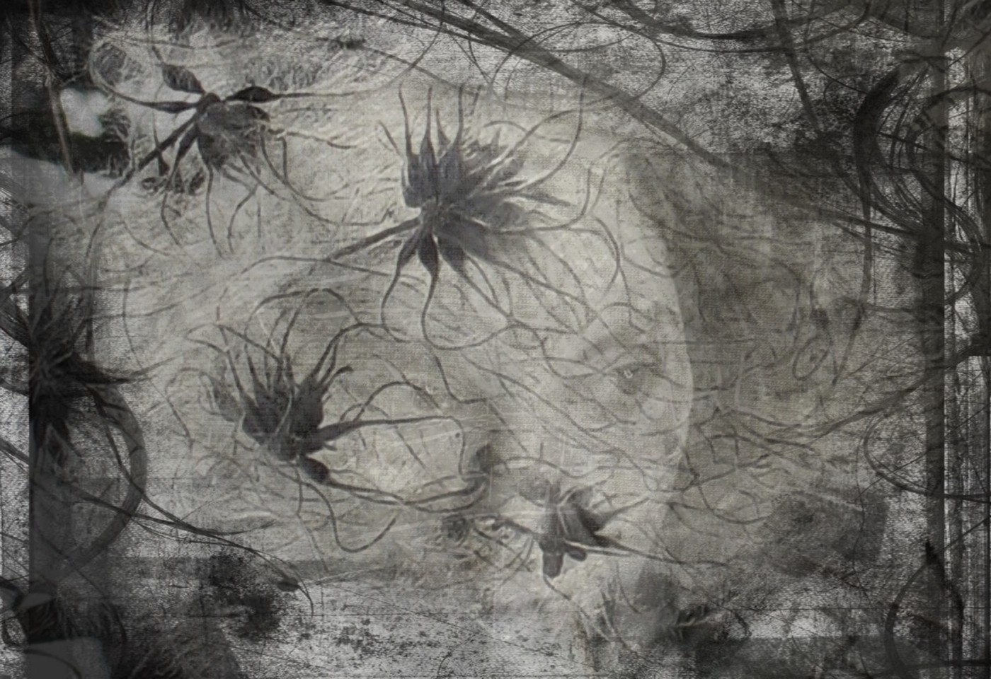 Composite image in black and white includes a photo of a woman's face, fuzzy flower seeds and filagree designs.