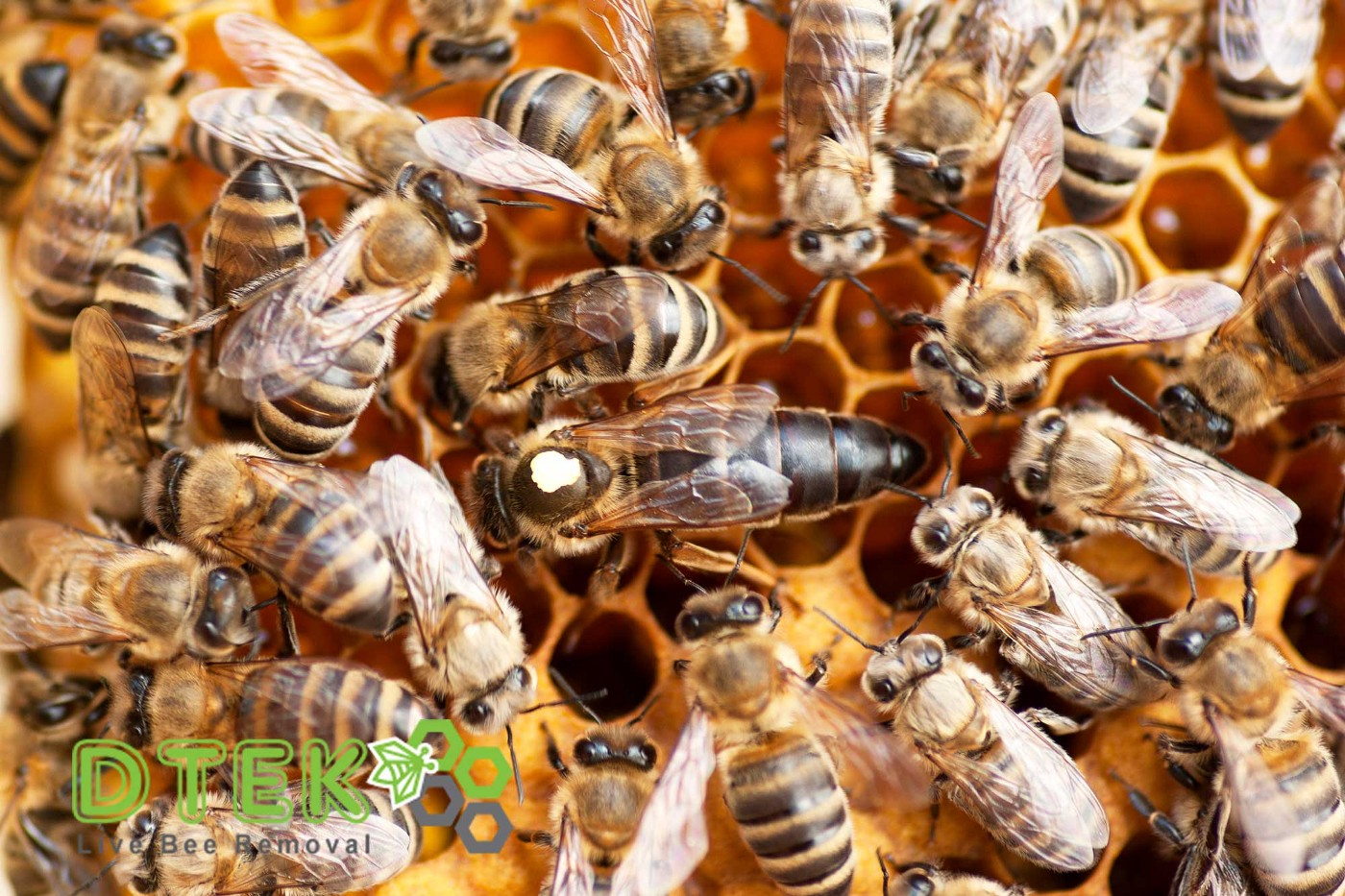 learn from honey bees
