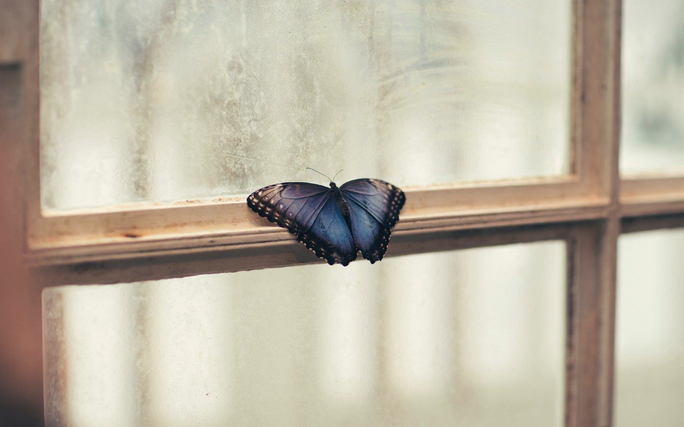 butterfly resting on a window frame