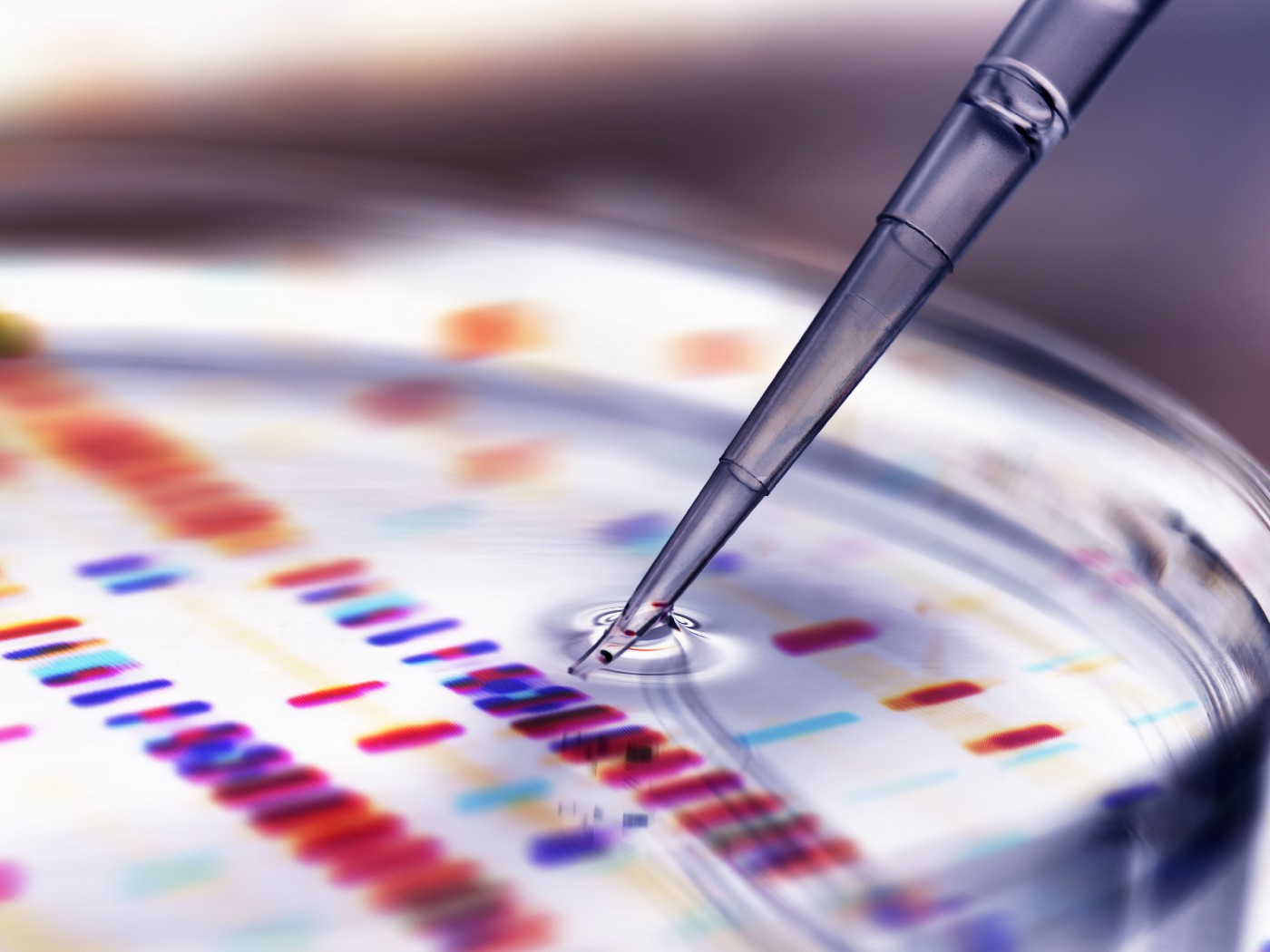 A pipette adds a sample to petri dish with DNA profiles in background.