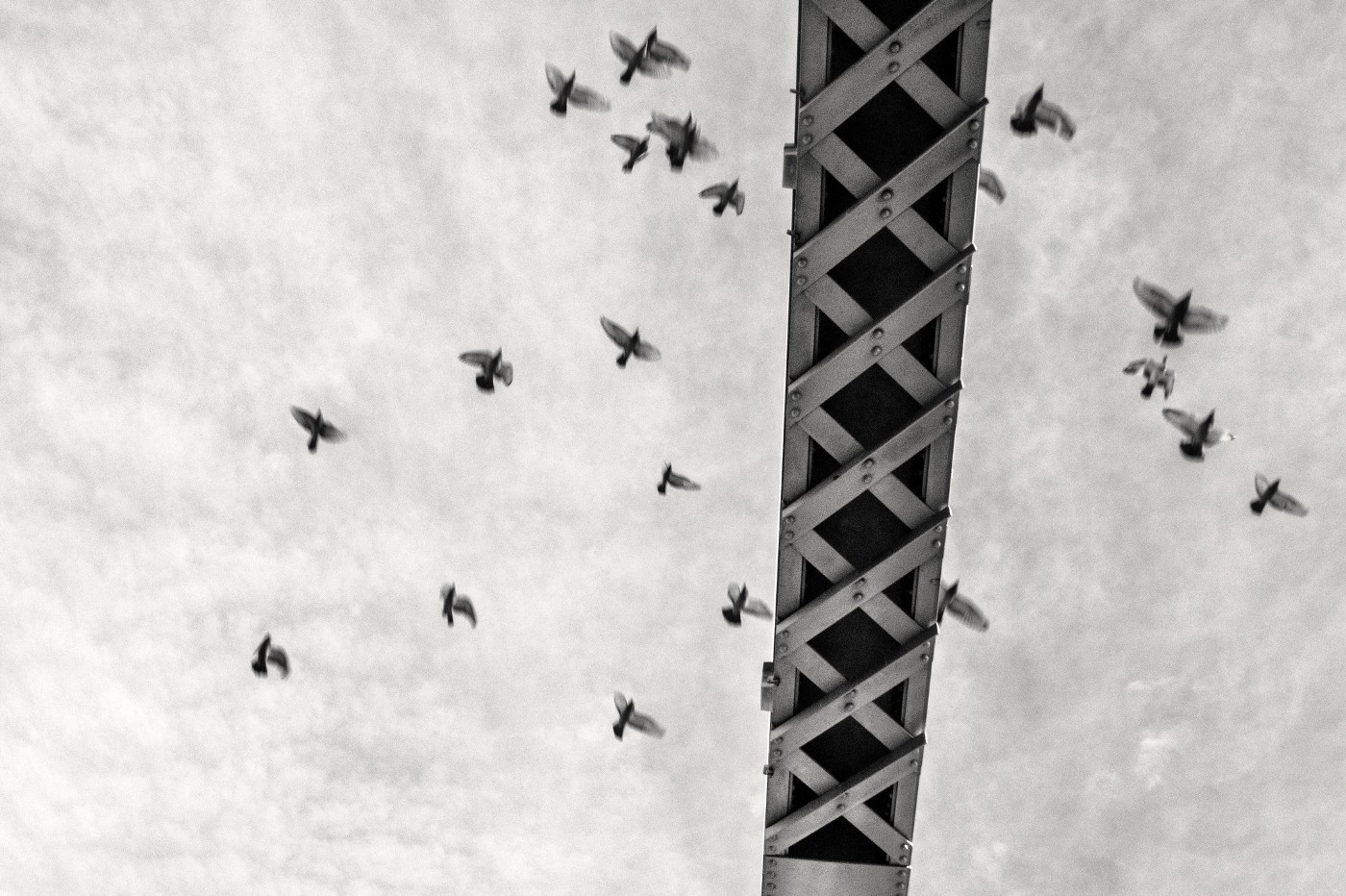 A black and white photo of birds flying against a construction crane in the sky.