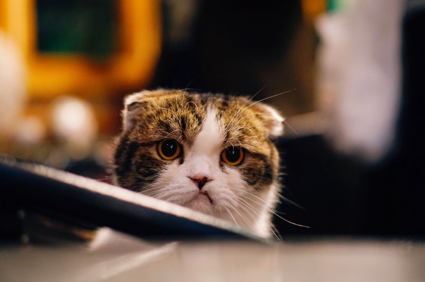 a cat looking at you with attitude