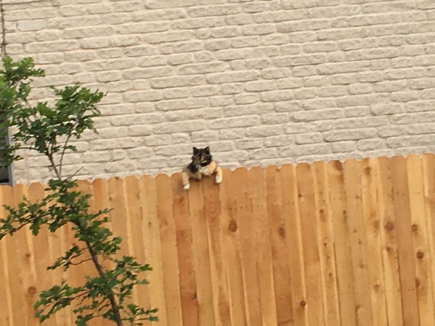 Cat hanging on fence by front paws