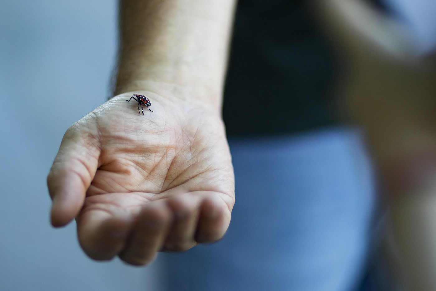 an outstretched arm with an insect on the hand