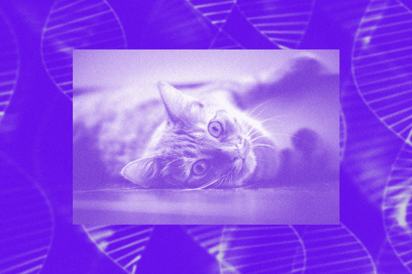 A photo illustration of a cat lying on its side, juxtaposed against a background showing DNA strands.